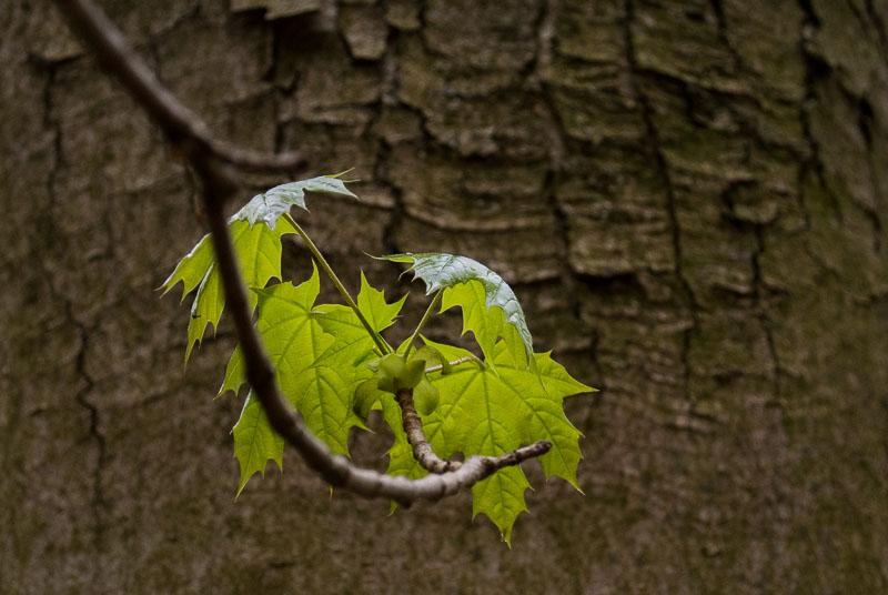 Listí u Jevan