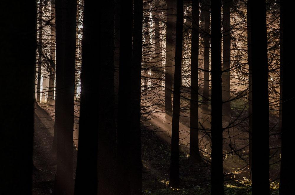 Les nad Pístovem s ranními paprsky slunce pronikající mlhou.