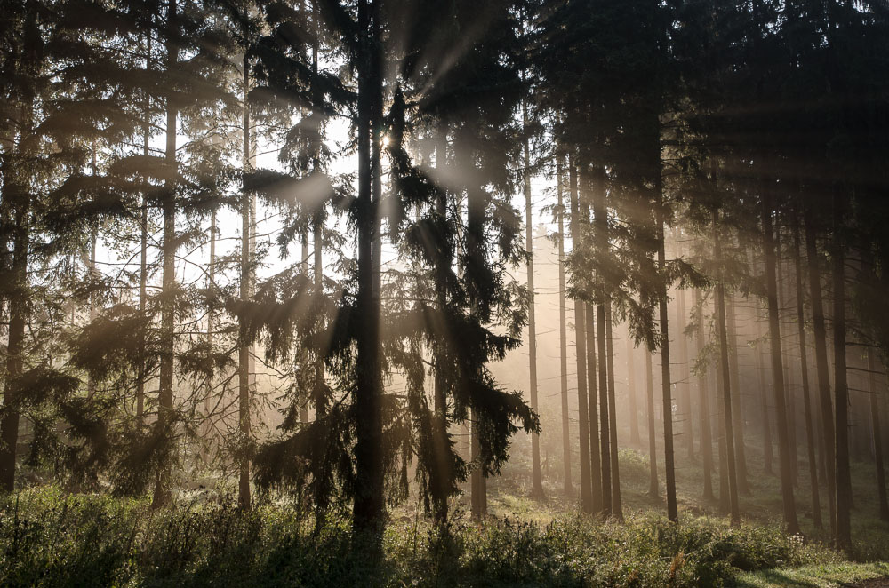 Mlha v lese nad Pístovem