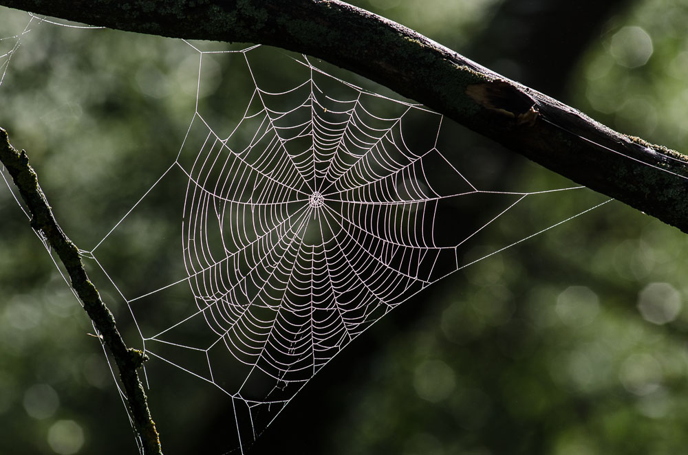 Pavučina v ranní mlze