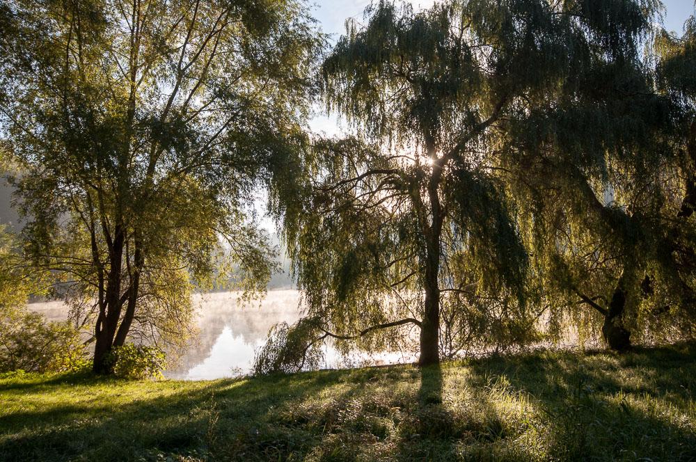 Stromy v protislunci na břehu Věžáku