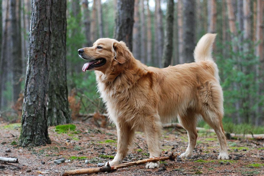 Na focení psa v plnérychlosti je autofokus krapet pomalý, na statické snímky však ideální