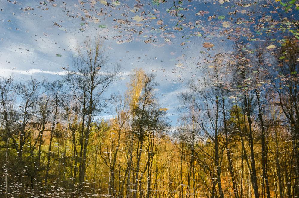 Reflexe v rybníce u Jevan - pokud snímek otočíte, trvá divákovi trošku déle, než zjistí, že se jedná o odraz