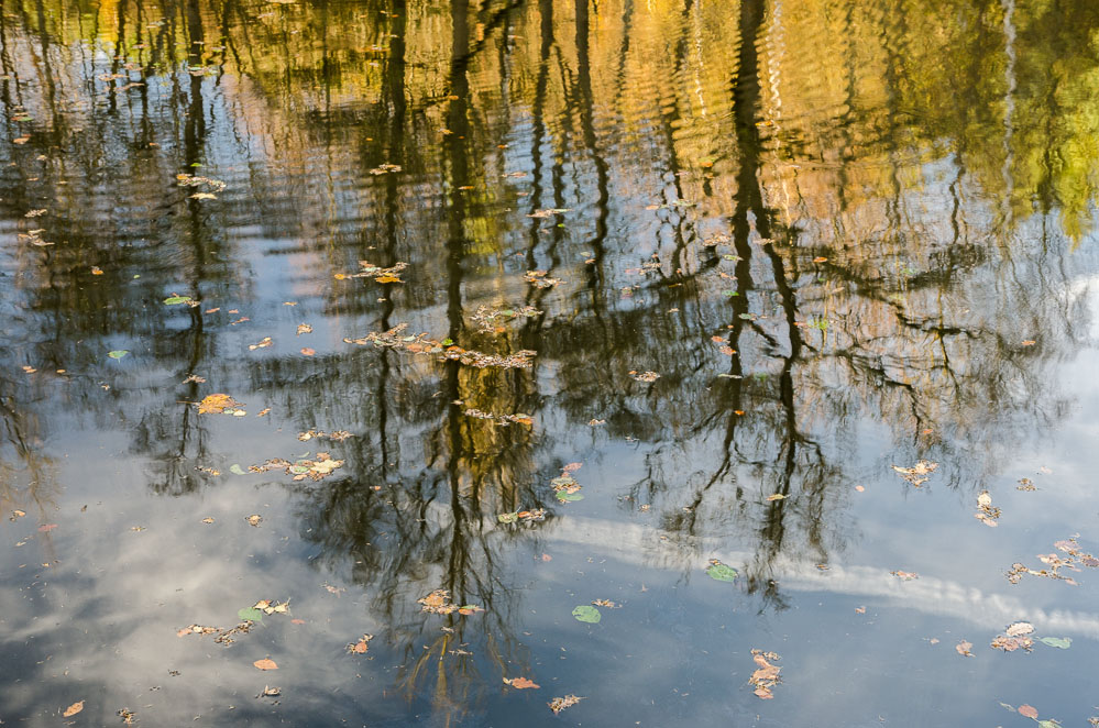 Reflexe v rybníce u Jevan