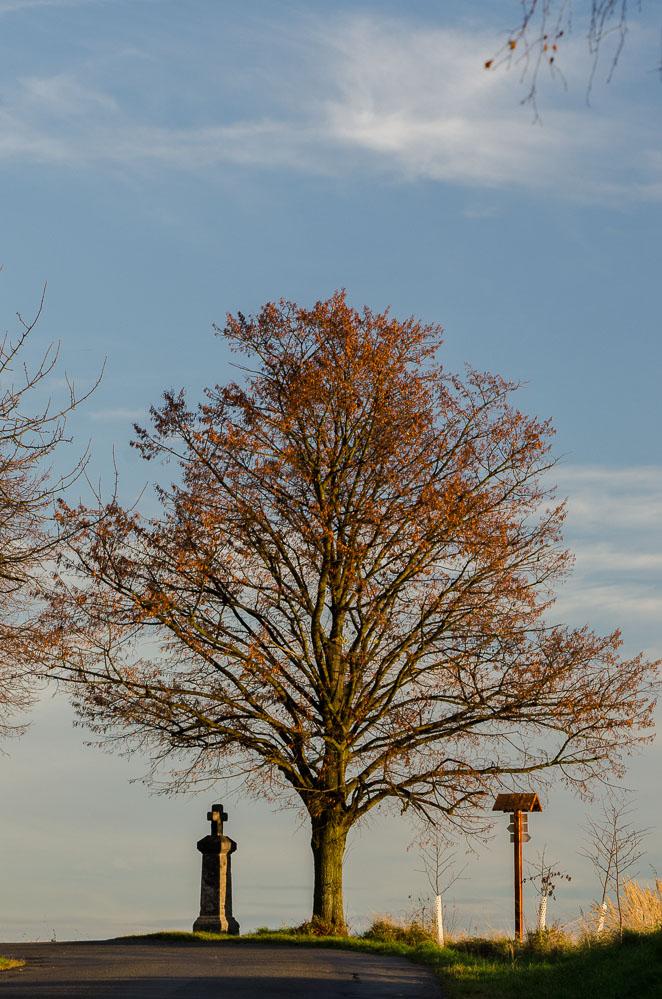 Strom nad Turkovicemi