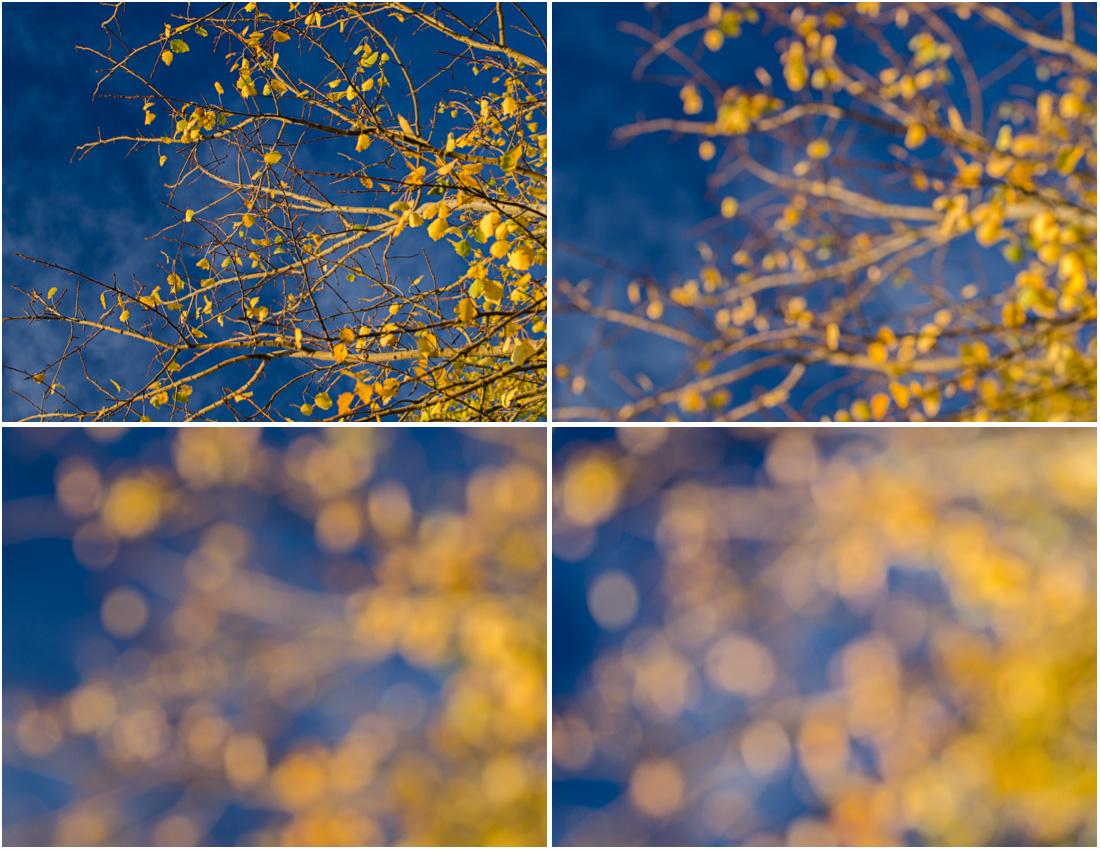I neostrá fotografie může být krásná - zkuste někdy rozostřit svoje fotografie manuálním přeostřením na blízko
