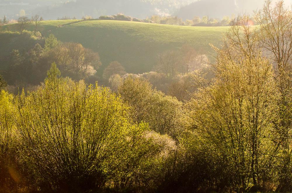 I když v černém světle Vás bude lákat fotit zejména po světle, kde je kontrast největší, nebojte se fotit i téměř proti slunci - zejména listí stromů krásně svítí.