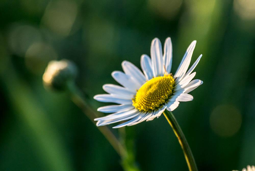 jarni-kvety_14