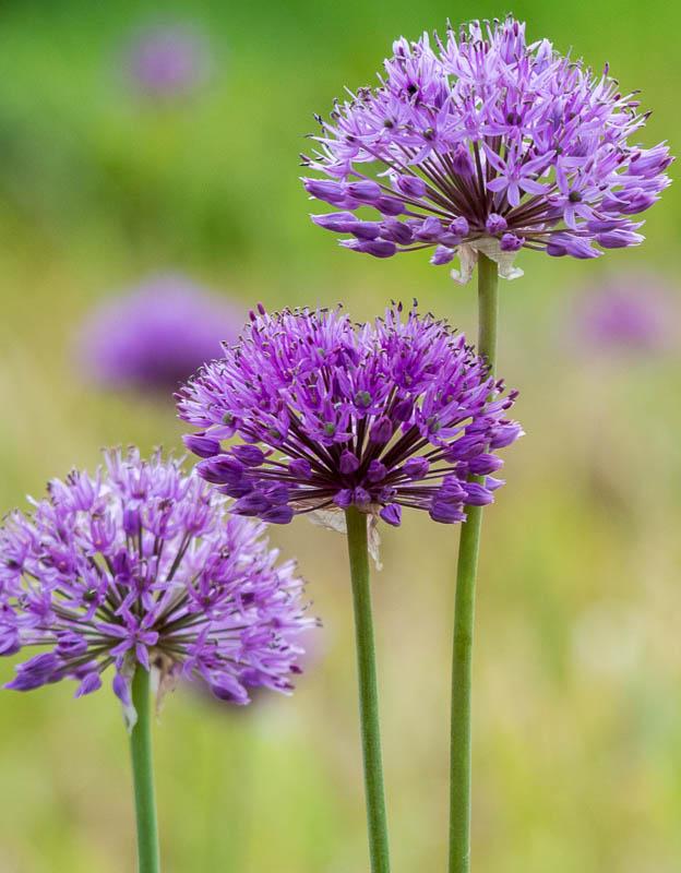 jarni-kvety_4