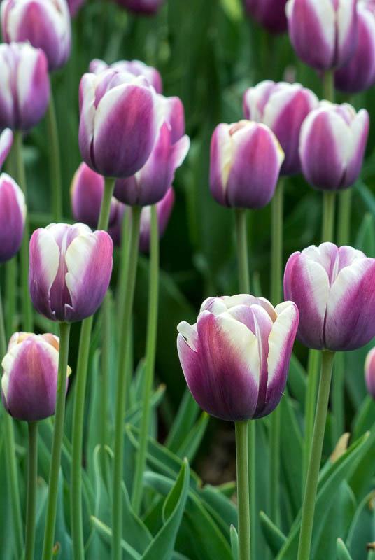 jarni-kvety_5