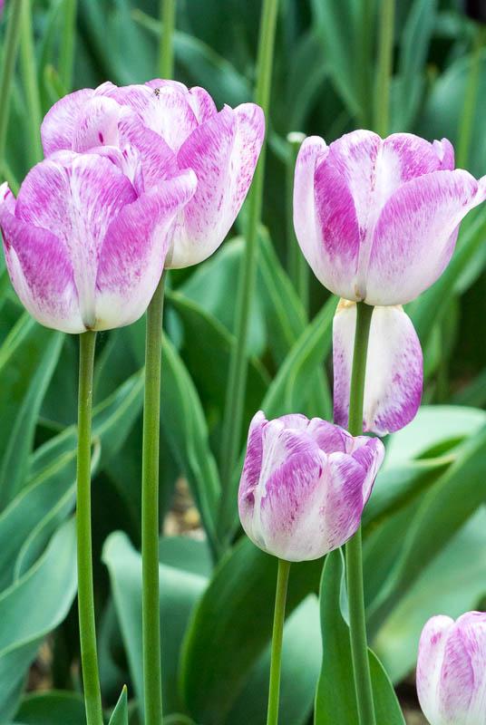 jarni-kvety_6