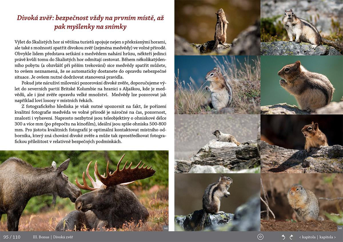 Wildlife v Kanade-Fotopruvodce nejen pro fotografy o Rocky Mountains (Skaliste hory) - Kanada