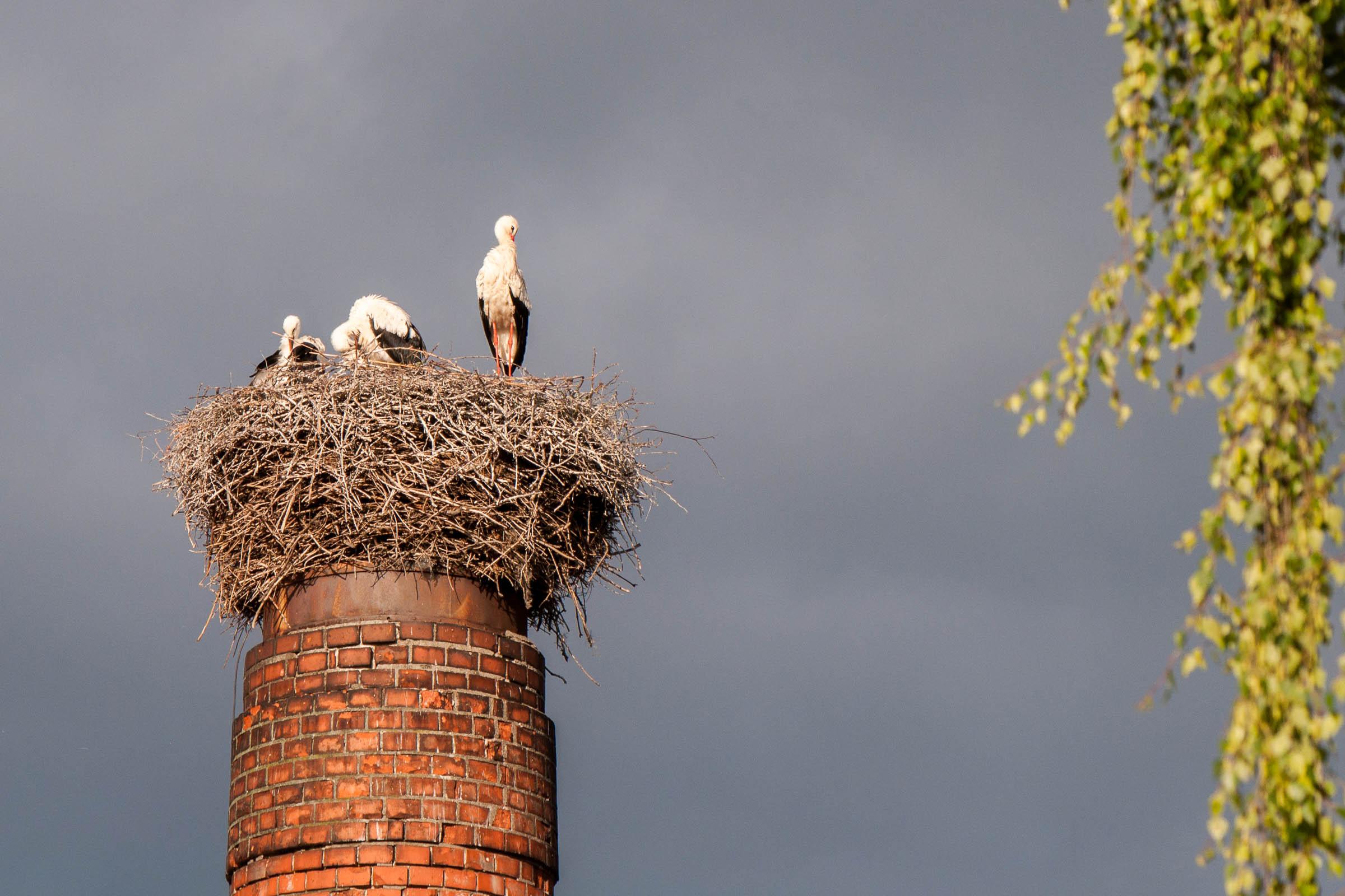Čapí hnízdo a krajina kolem Nepomuku