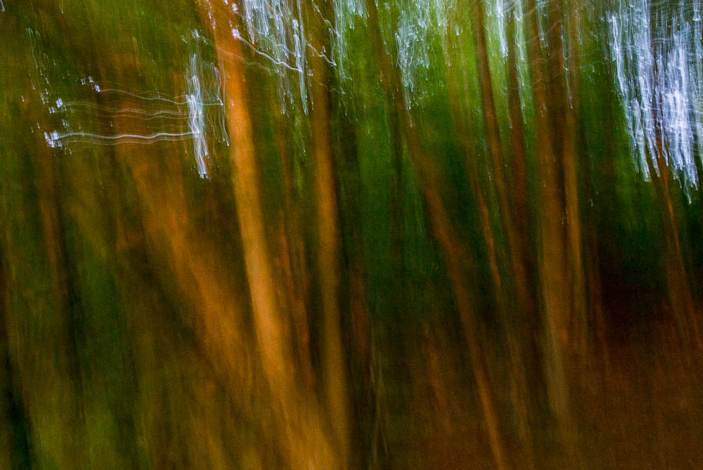lesni-abstrakce_11