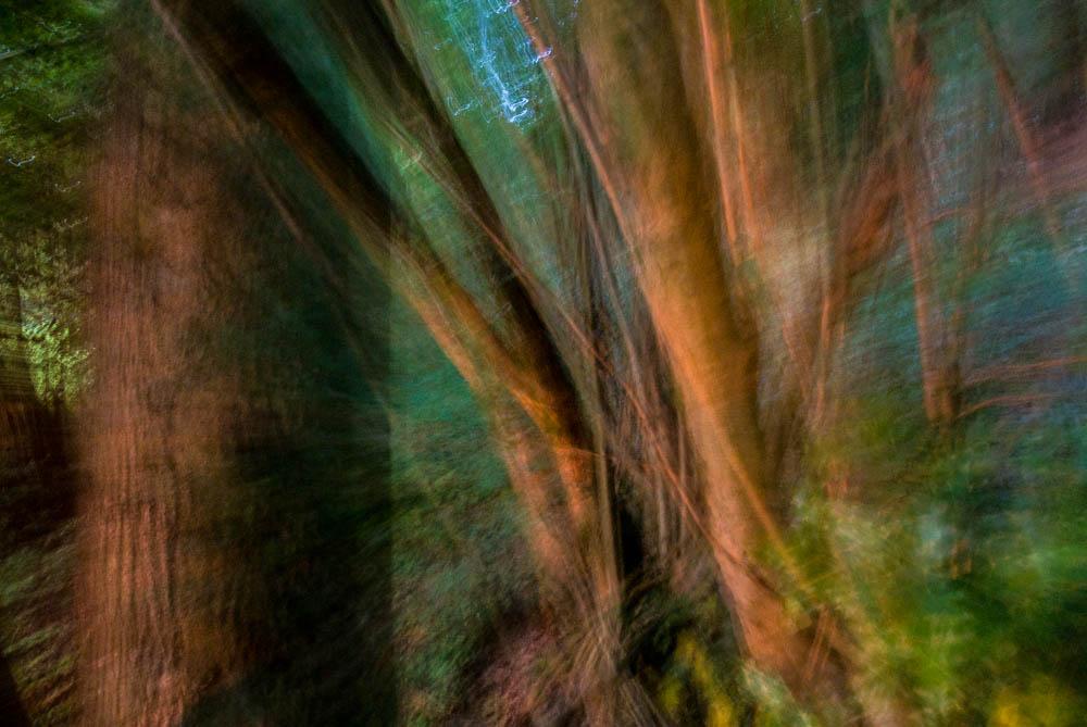 lesni-abstrakce_13
