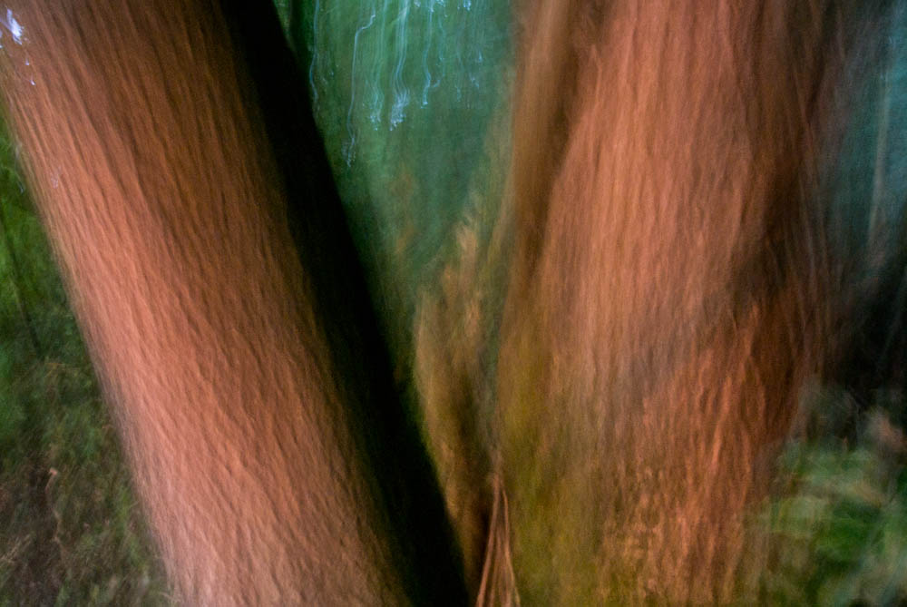 lesni-abstrakce_14