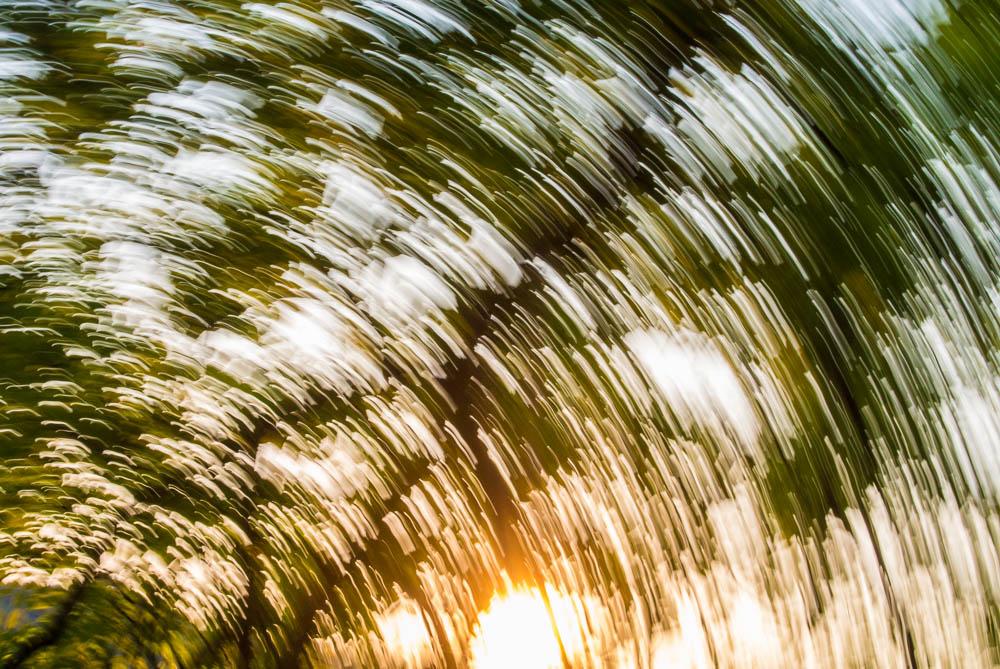 lesni-abstrakce_3