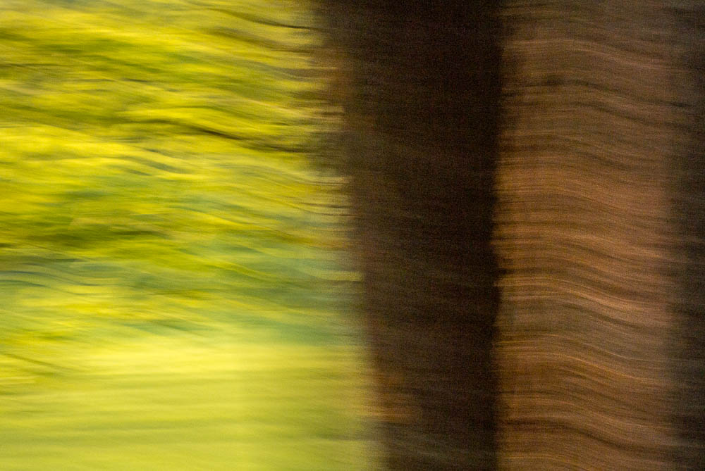 lesni-abstrakce_4