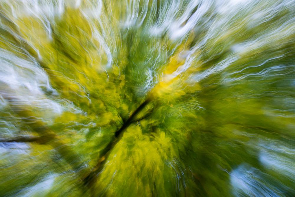 lesni-abstrakce_5