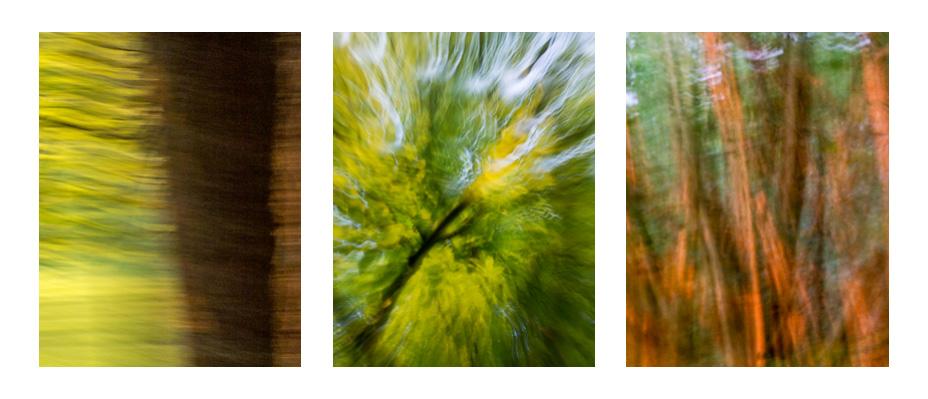 Kreslení světlem – abstrakce v lese
