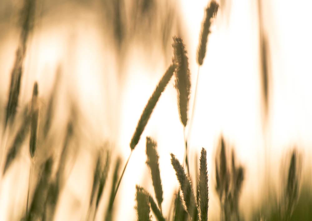 Jemné protisvětlo na louce - fotografie jemně tónována do teplejšího odstínu odpovídajícímu nízkému zapadajícímu slunci