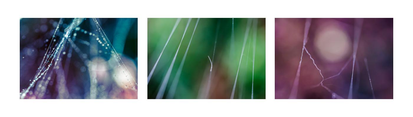 Makro-abstrakce pavučiny