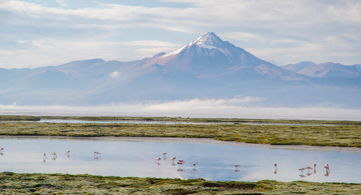 Plameňáci na Salar de Surire s vulkánem Cerro Puquintica v pozadí (5.712 m.n.m.)
