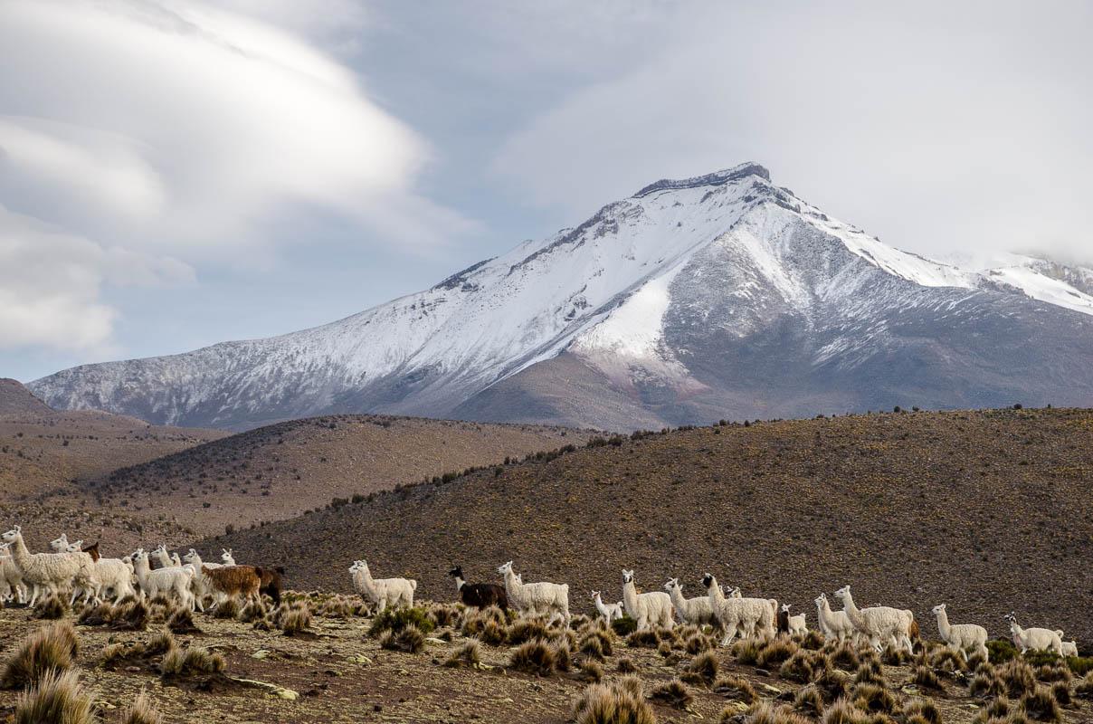 Pohled od Salaru k Bolívii - všude okolo velehory (5-6tis metrů vysoké) a lamy