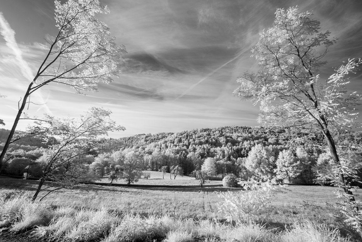 Lesy pod Vyskeří (infračervená  fotografie)
