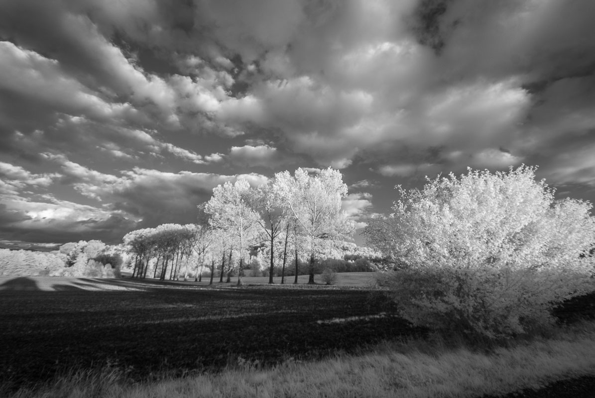 Topolová alej (infračervená  fotografie)