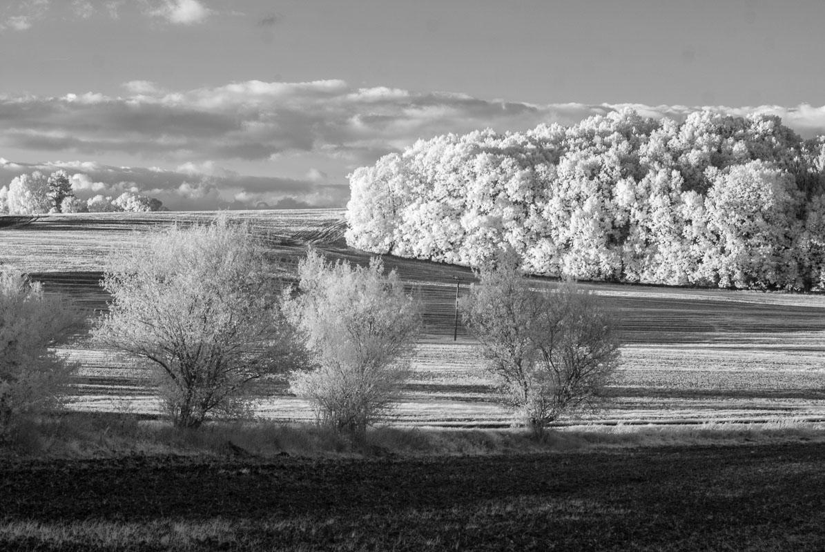 Les a remízek u Libošovic (infračervená  fotografie)