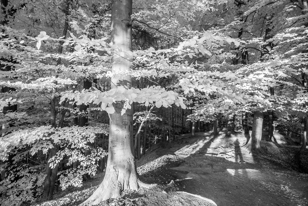 Boky a můj stín (infračervená  fotografie)
