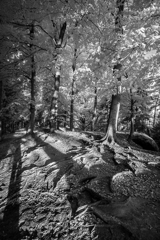 Ranní dlouhé stíny (infračervená  fotografie)