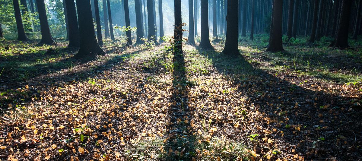 Les u Krásné vyhlídky