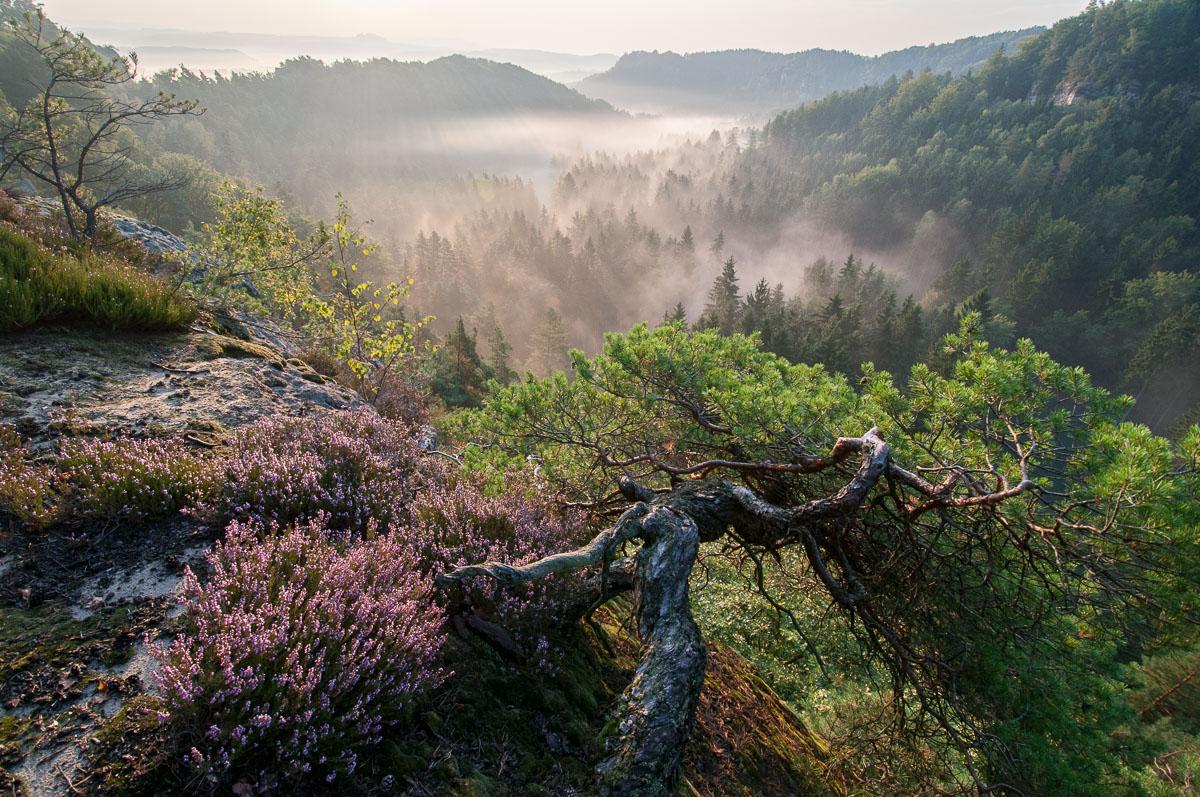 O vstávání, ranní mlze vČeském ráji a o pre-vizualizaci