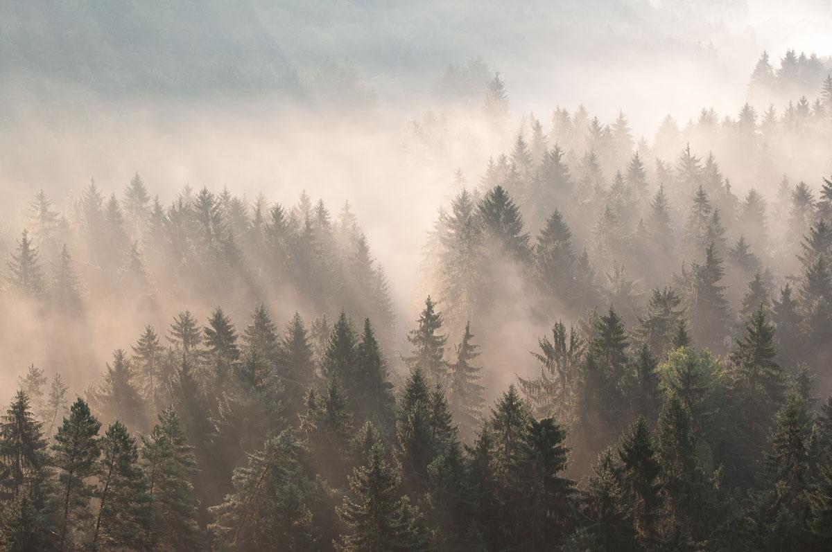 Ranní mlha nad lesem v Příhrazských skalách - takto jsem si to nějak večer před focení představil - a jen díky tomu ráno vstal.