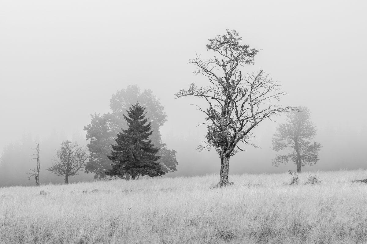 Smutne-Krusne-hory_1