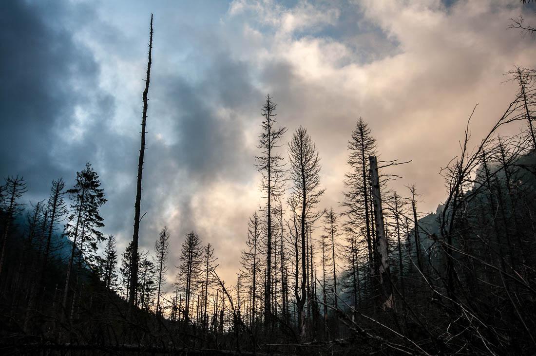 Polomy po katastrofální vichřici z roku 2006 mají svůj fotografický půvab.