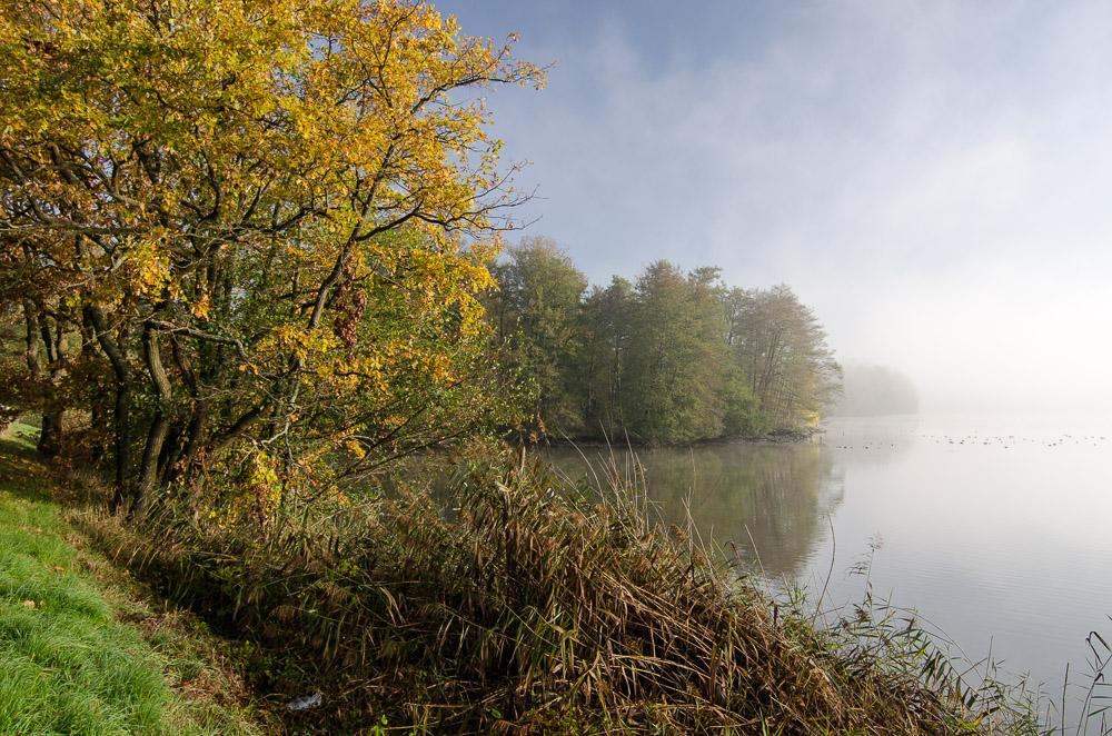 Mlha na rybníkem Žabakor (Český ráj)