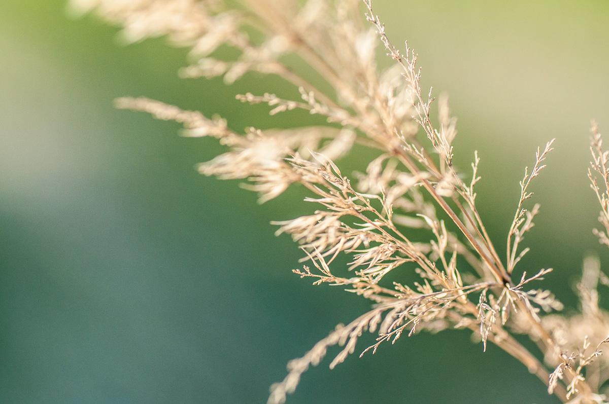 Makro trávy – nevšední fotky zcela všedního motivu