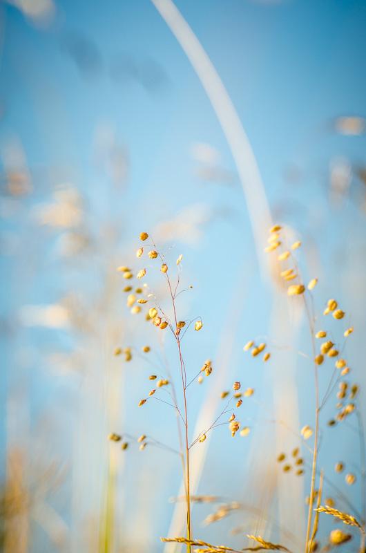 Modré nebe tvoří skvělý barevný kontrast s oranžovými tóny podzimní trávy.