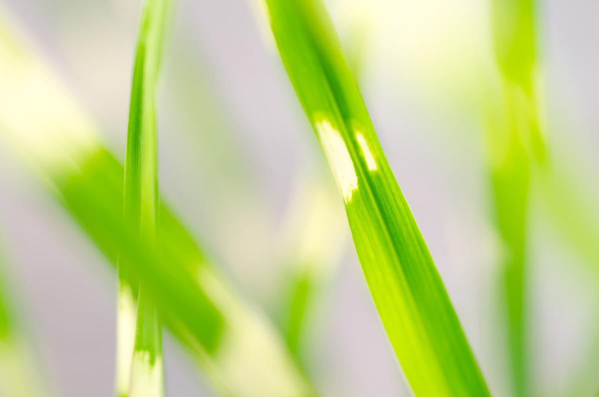 Svěží zelená tráva