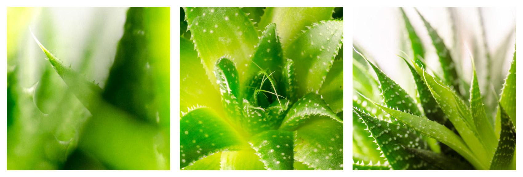 Jak fotit za špatného počasí: makro kaktusu