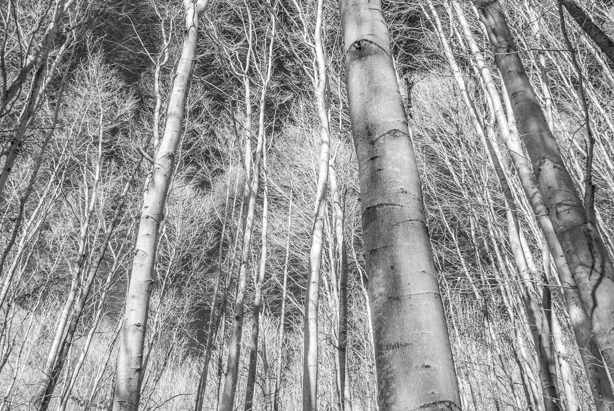 V zimním lese s infračerveným foťákem