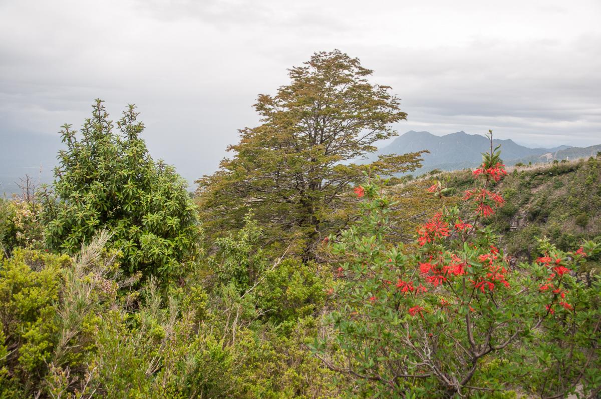 Bujná vegetace na Calbucu