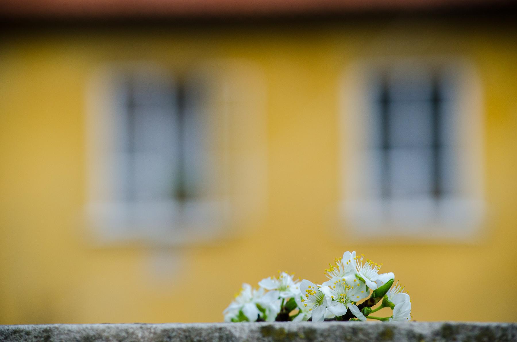 Jaro v Praze - okna a květy třešní v popředí