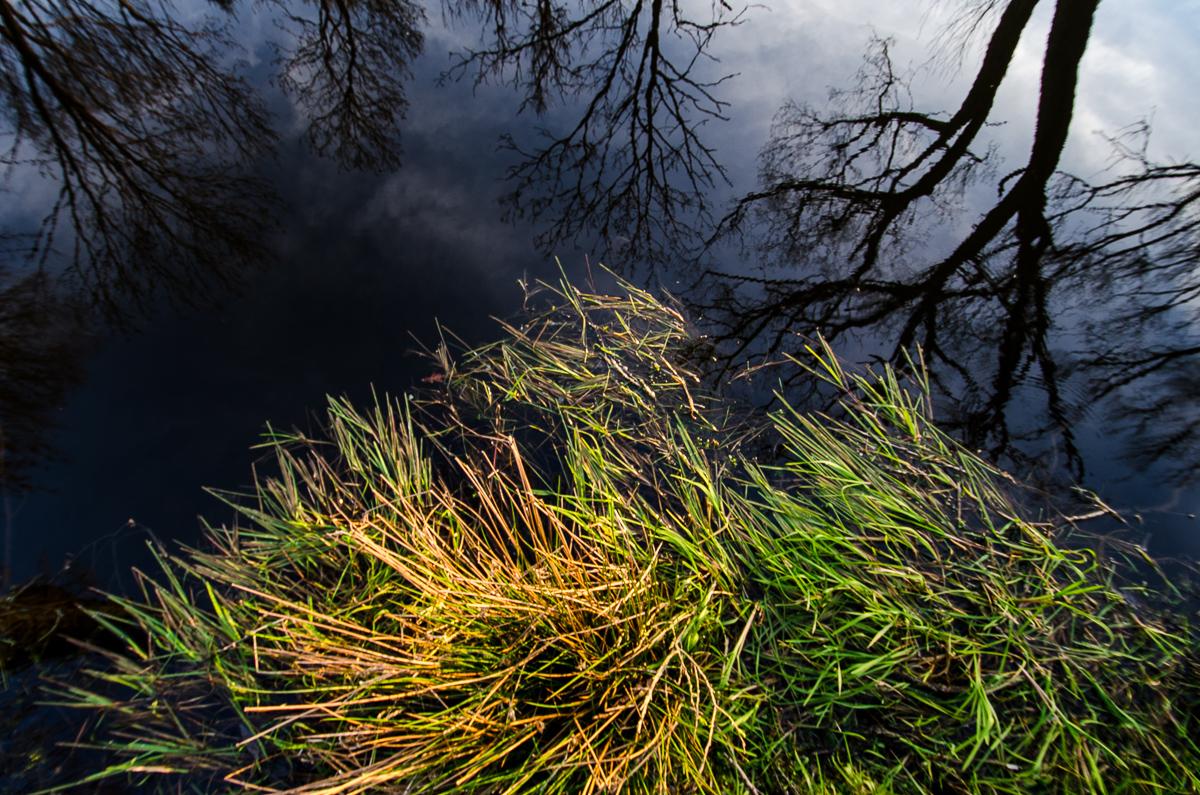 Temně modré nebe a zelenožluté trávy - docela působivá vizuální  kombinace.