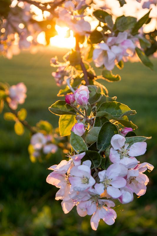 Detail květu v protislunci