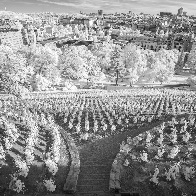 Vinice pod Grébovkou s výhledem na Pankrác