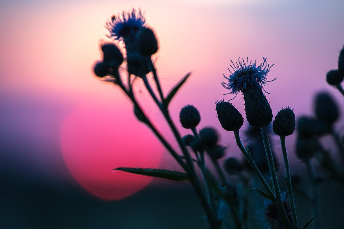 Letní téma: siluety květů se zapadajícím sluncem